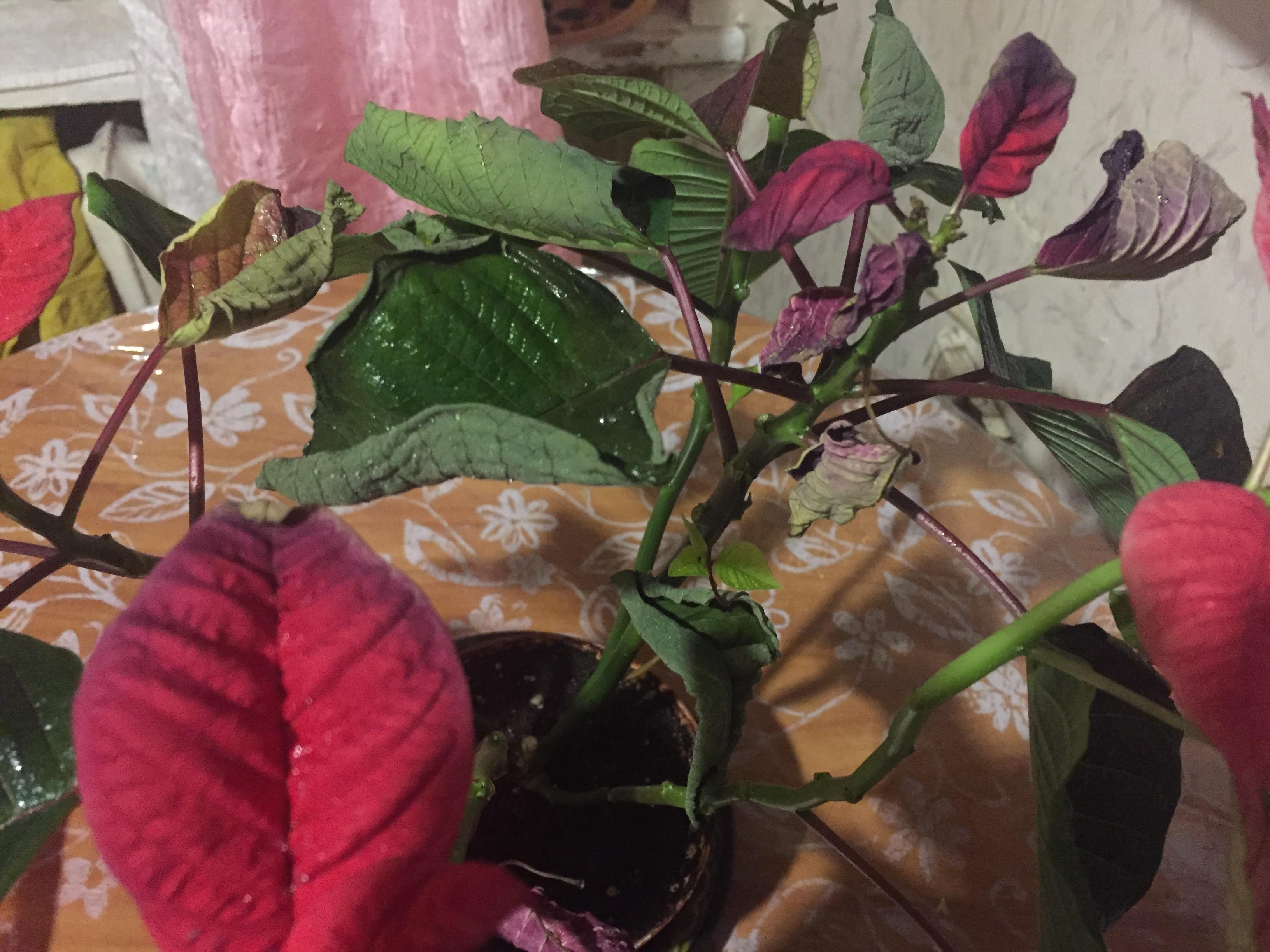 Голубцы со свежей капустой пошаговый рецепт