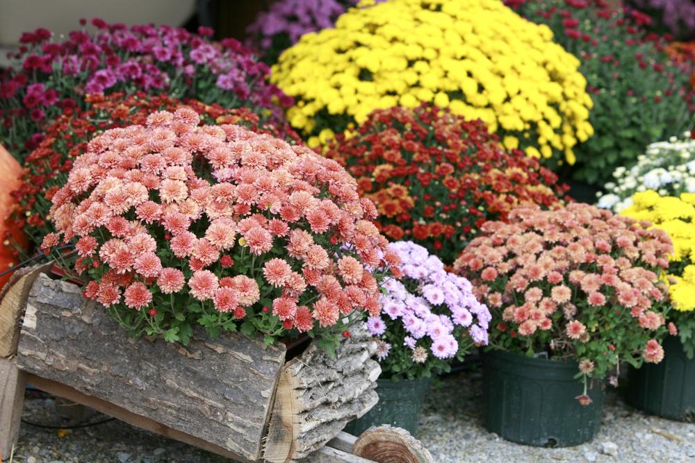 Цветы в горшках в саду фото