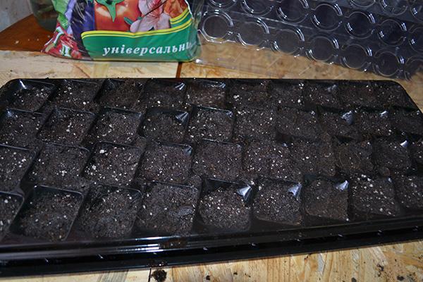 Грунт для посадки лобелии семенами