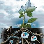 Гидрогель для растений: свойства и способы применения