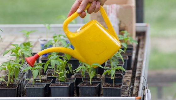 Подкормки стимулируют рост рассаду перца