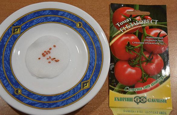 Замачивание семян томатов на влажном ватном диске
