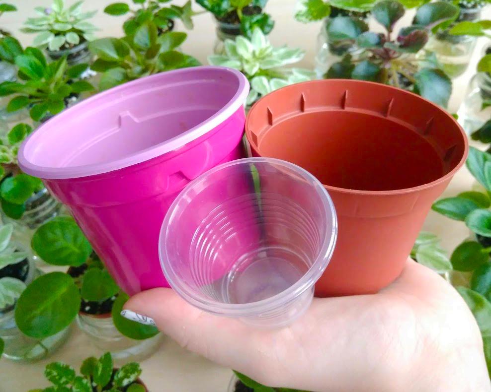 Пластиковые горшки малых размеров - отличный выбор для сенполий