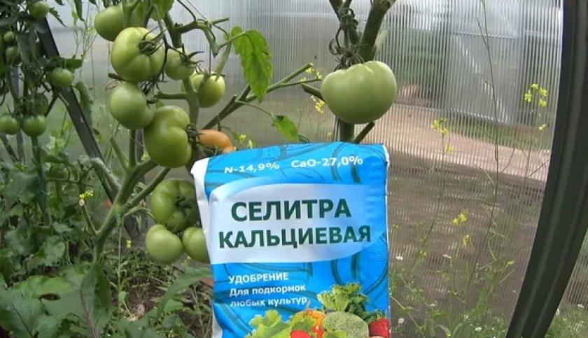 Кальциевая селитра от вершинной гнили на томатах