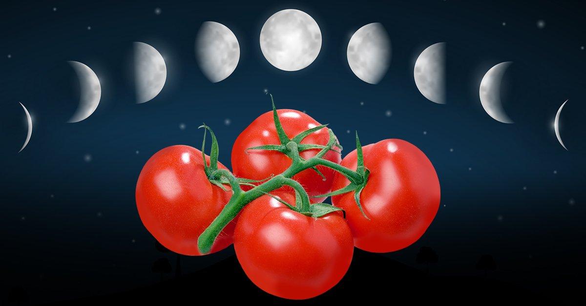 Лунный календарь - посев томатов на рассаду