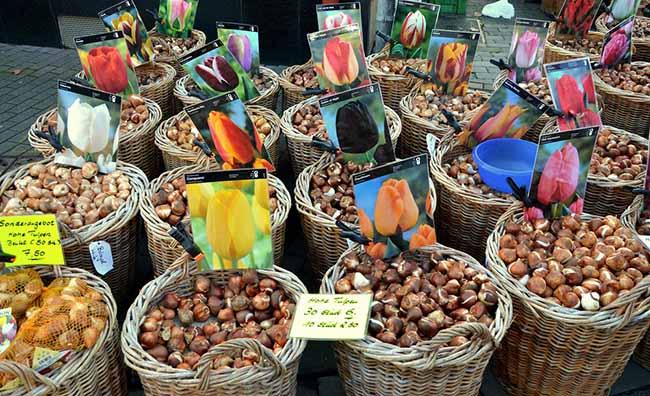 Разнообразие сортов тюльпанов на рынке