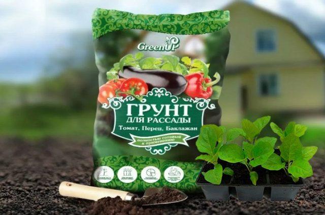 Баклажаны предпочитают плодородный грунт, богатый органикой