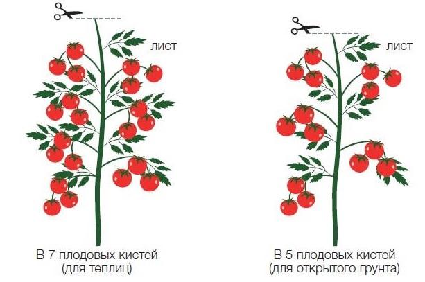 Схемы формирования индетерминантных томатов при выращивании в 1 стебель