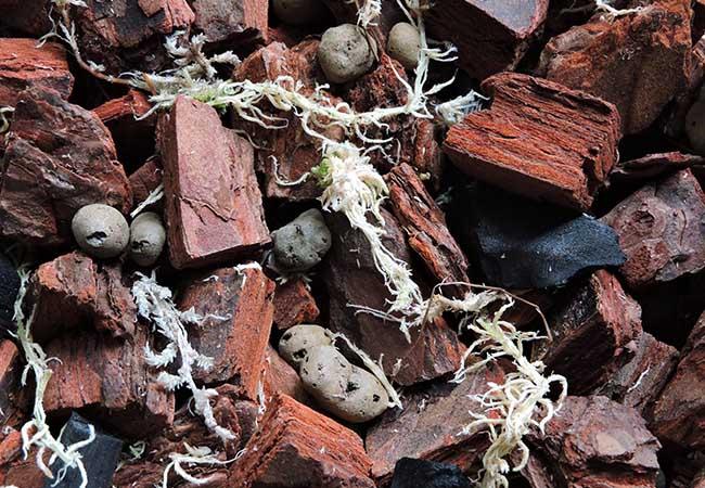 Грунт для пересадки орхидеи - фото