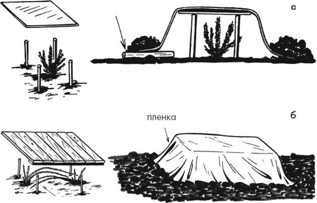 Создание воздушного укрытия для хризантем